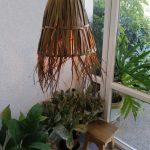 קורונה אהובתי - גוף תאורה תלוי מענפים דקים של דרצנה אוסטרלית